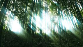 透过树林的光影