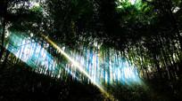 竹林里的阳光投射