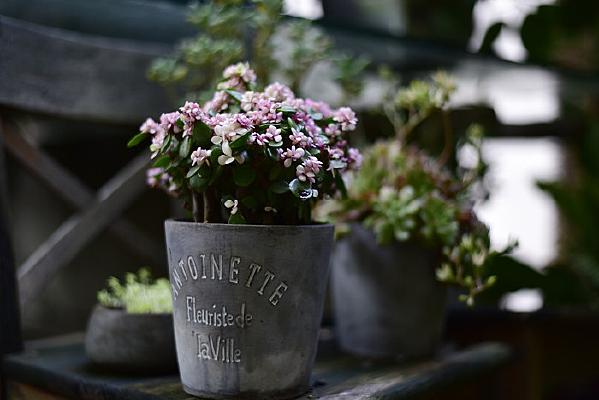 小文艺风格的花盆