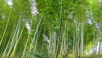 竹林自然风光