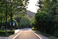 林间小公路