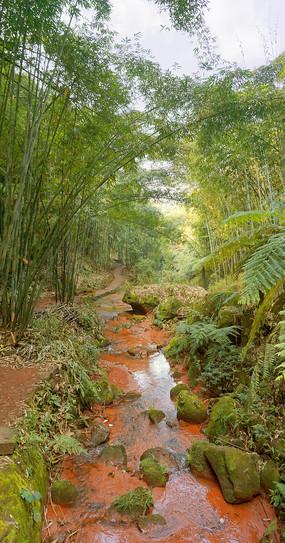 赤水红石野谷-山谷竹林和小溪