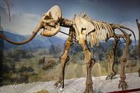 猛犸象骨骼化石