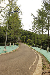 风景银杏树路