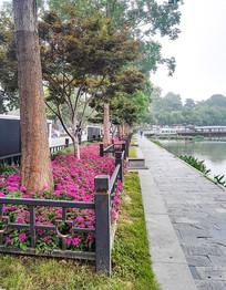 湖边红花小道