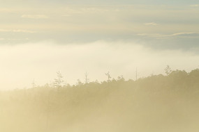 大兴安岭森林晨雾迷漫