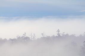 大兴安岭山林云雾缥缈