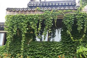 房屋茂盛绿植