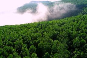 绿色林海云雾