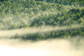 绿色树林晨雾