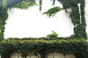 绿植爬满墙