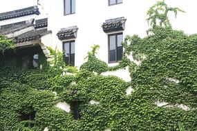 马头墙绿植
