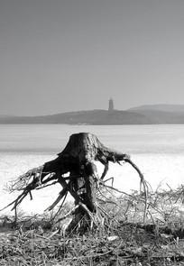 冰封湖边的老树装