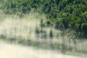 大兴安岭林海雾瀑风景