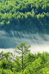 大兴安岭茂密林海云雾