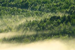 大兴安岭森林雾瀑