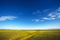蓝天和金黄的草原