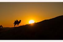 落日下行走的骆驼