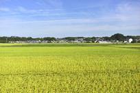 绿色的农田