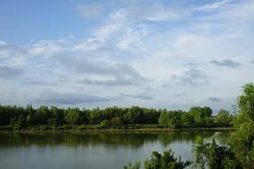 湿地丛林风景