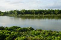 湿地红树林