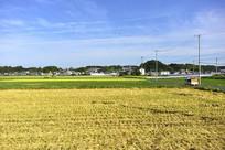 乡村的农田