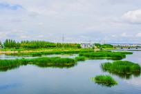 鞍山万水河与石桥附近独楼水草