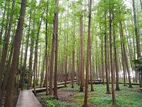穿梭树林的木板小路
