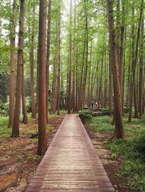 森林中的小木路
