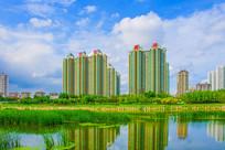 万水河对岸高层建筑与河中水草