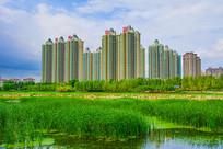 万水河水草与对岸的高层建筑