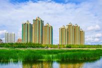 万水河水草与对岸高层建筑