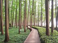宛转崎岖的树林小木路