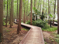 蜿蜒曲折的林荫小路