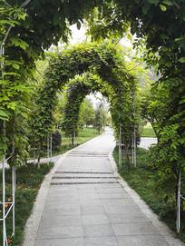 沿着小路穿过植物拱门