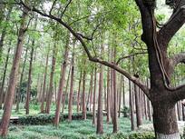 郁郁葱葱的树林树木