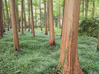 草地上郁郁葱葱的树木