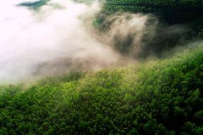 大兴安岭山峦密林晨雾风景