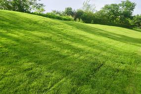 草坪-树影