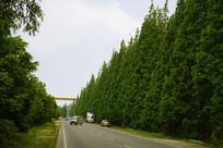 成都郊区-道路及绿化