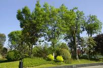 成都经开区音乐广场园林绿化