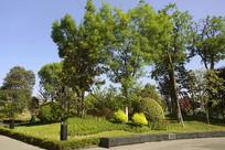 成都龙泉驿区音乐广场园林绿化