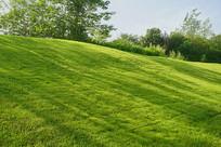 城市绿化带-阳光下草坪上的树影