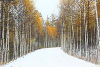 大兴安岭彩林山路雪景