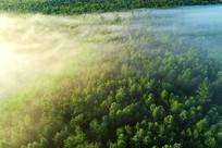 林海云雾朝阳风景