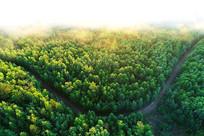 绿色林海云雾朝阳