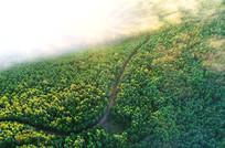茂密绿色林海云雾