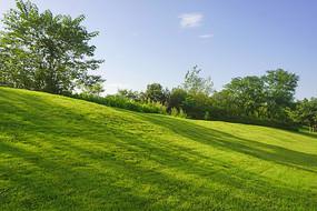 下草坪上的树影