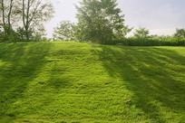 阳光下草坪上的树影