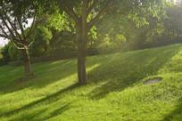 阳光下的城市绿化带草坪